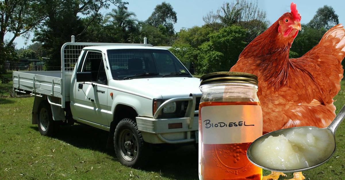 Biodiesel Chickenfat Fb